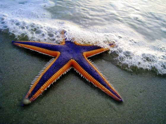 I Thank My Lucky Star